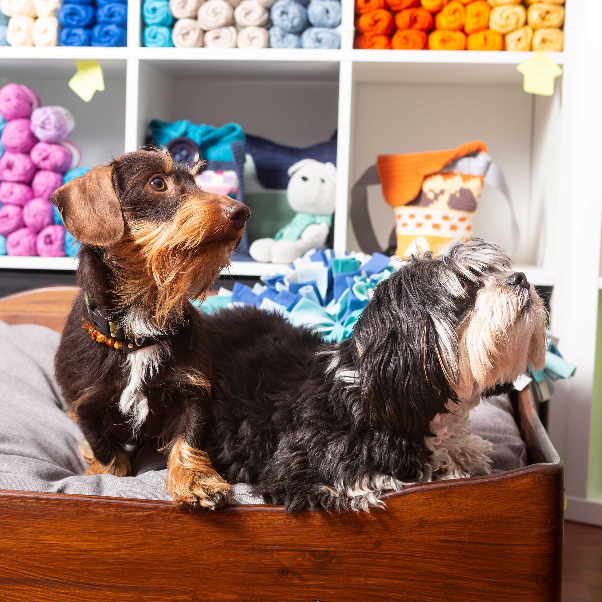Meine Luzy mit Rauhaardackel-Kunpel Cap im Hundebett